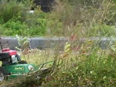 Bush Hog & Clearing, Auburn, AL