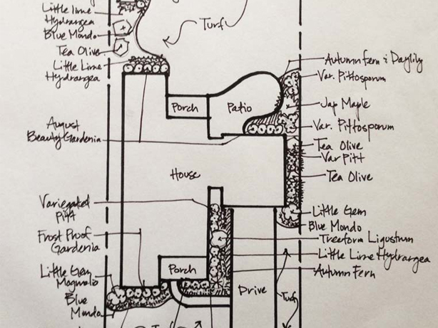 hand drawn landscaping plan